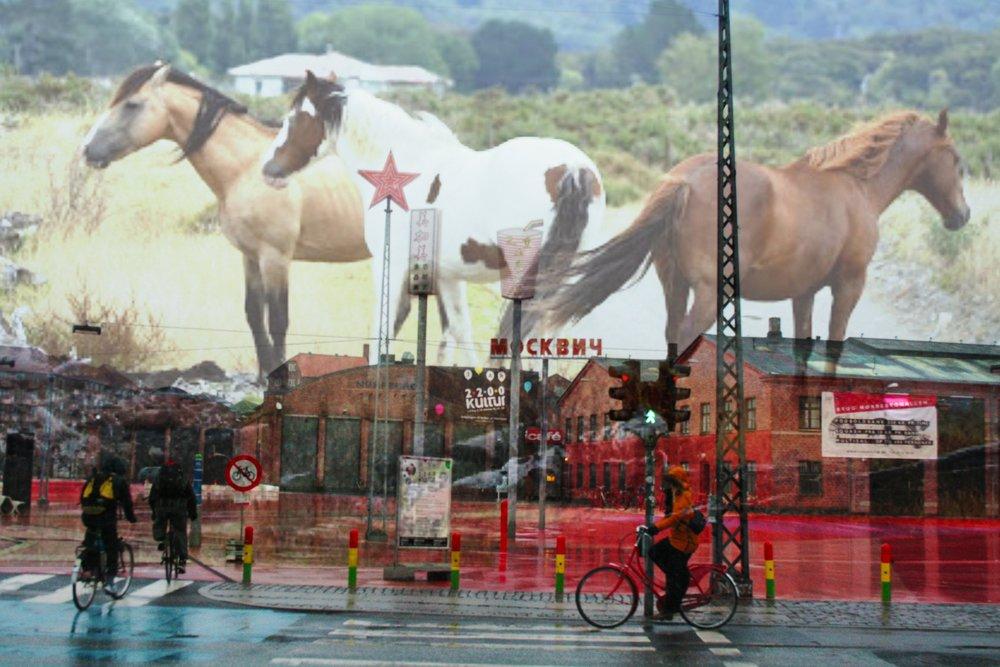 Horses in Copenhagen.jpg