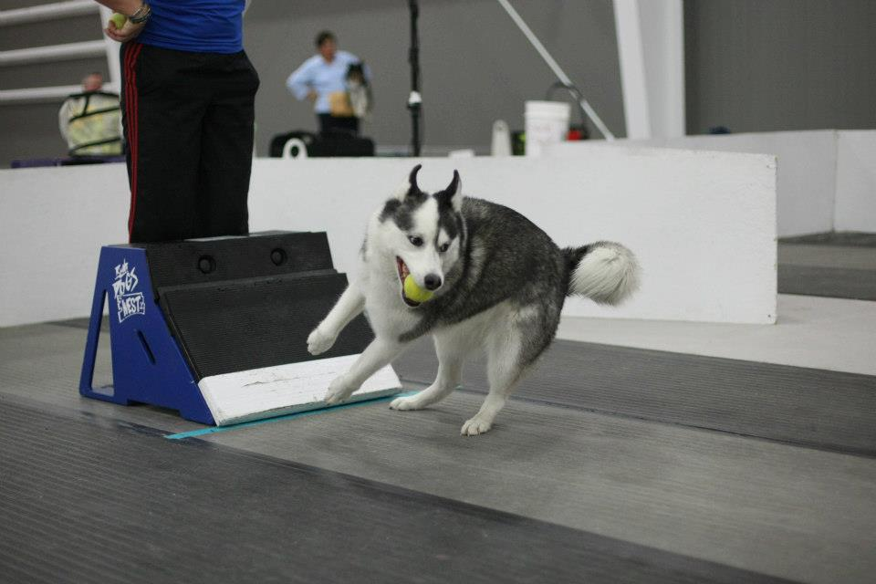 flyball training classes az