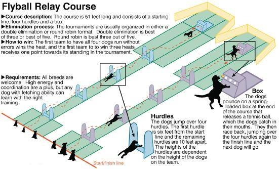 flyball course