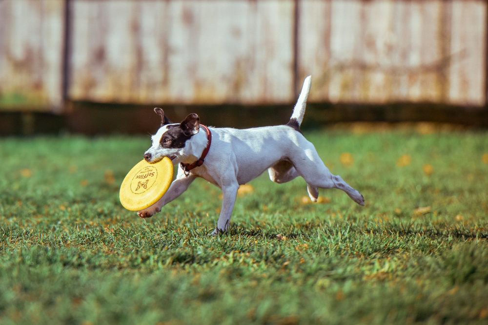 frisbee.jpeg