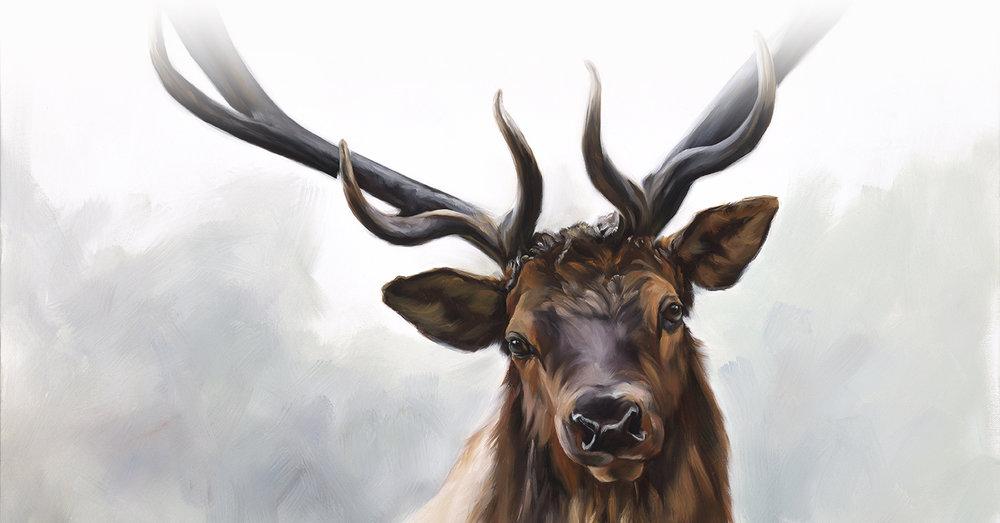 Elk_cropped.jpg