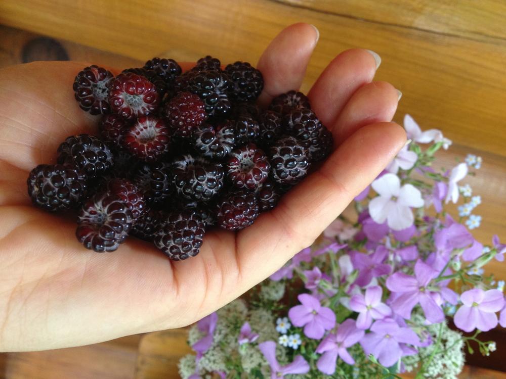wild raspberries.jpg