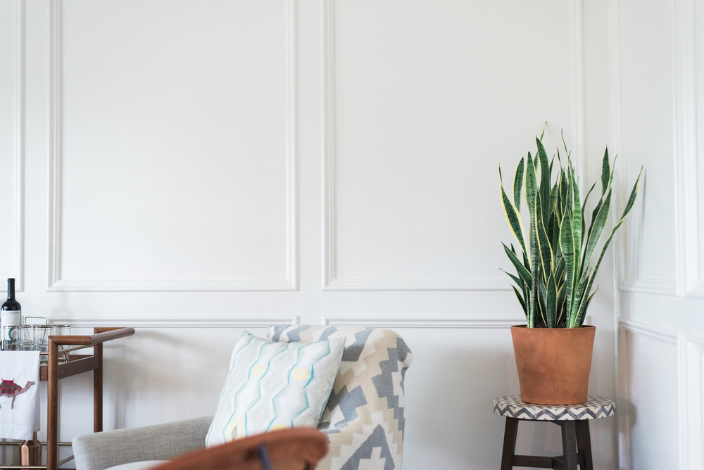 Why the snake plant is one of the best house plants.