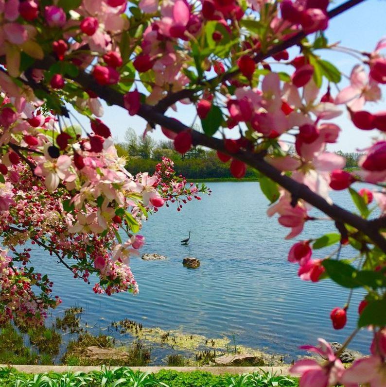 Photo compliments of Chicago Botanic Gardenon Instagram