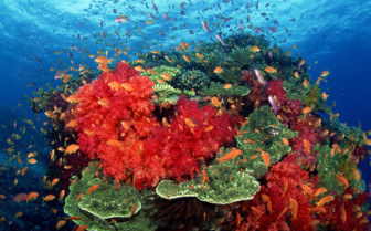 163003-beautiful-coral-formations-in-taveuni.jpg