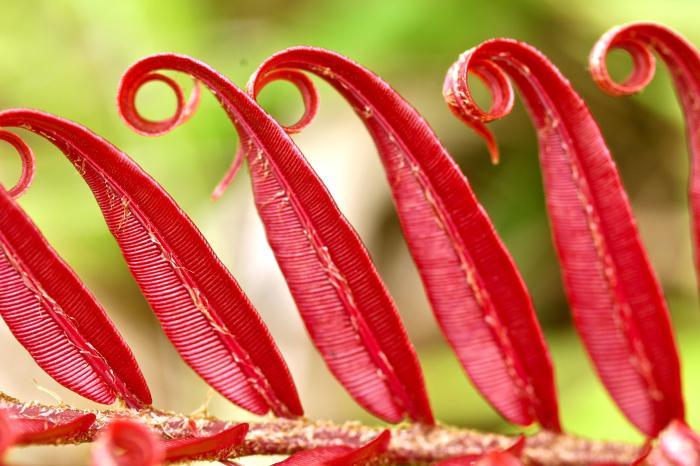 taveuni flower.jpg