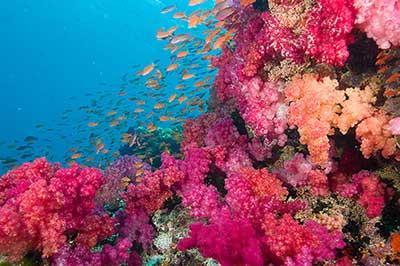 Rainbow-reef-Taveuni.jpg