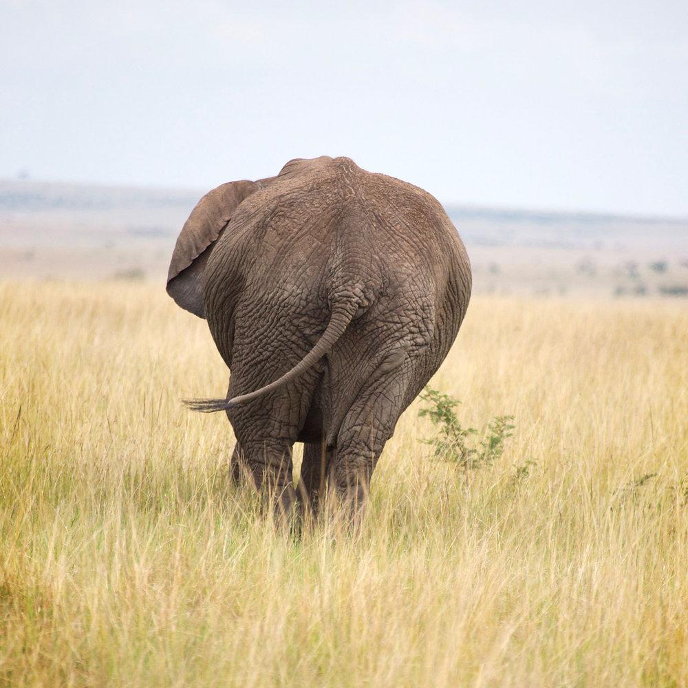 Africa0239.jpg