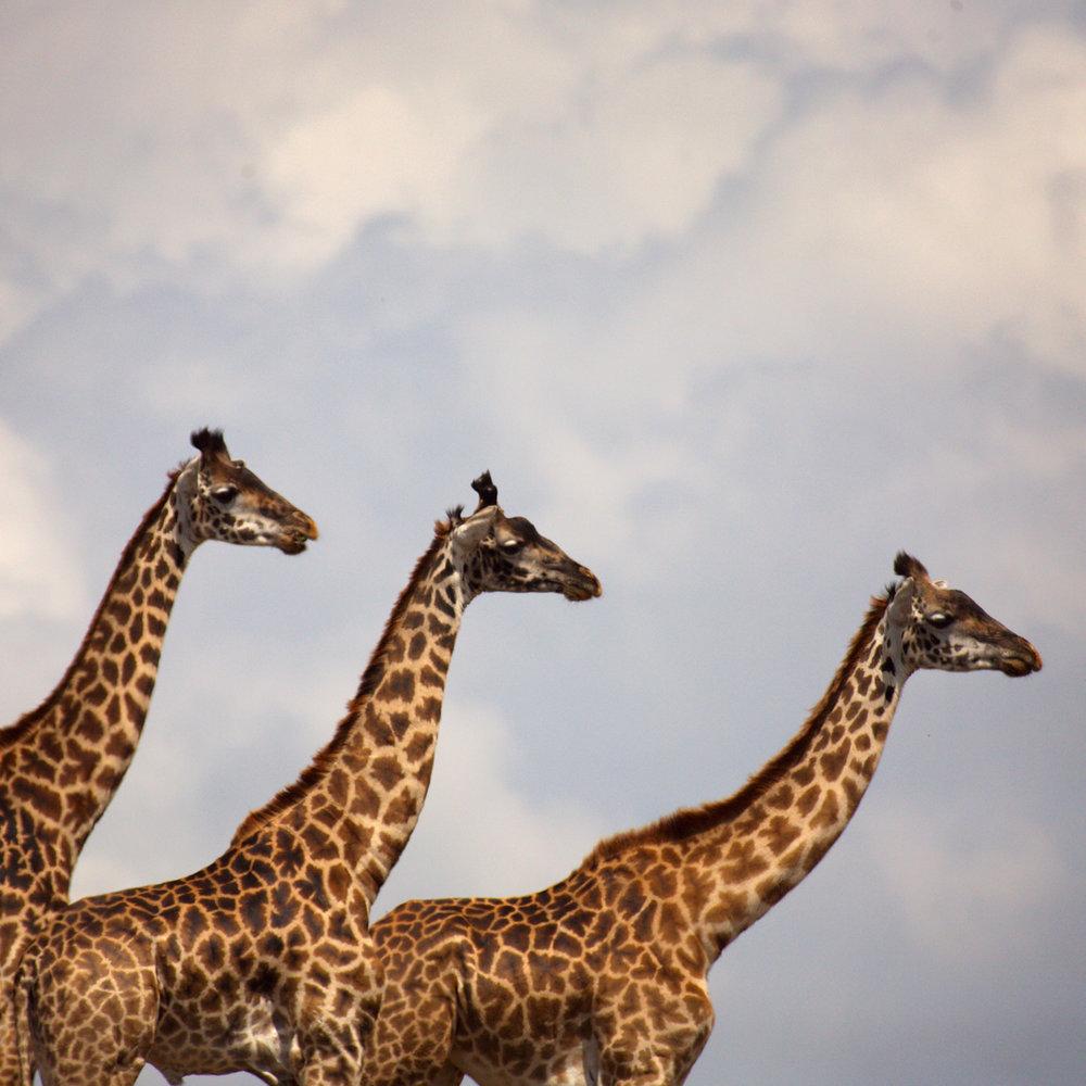 Africa0608.jpg