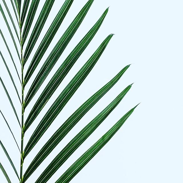 • S L O W D O W N • When you move to fast, you miss SO much •  #beautyinthedetails #slow #simple #beauty #plants #nature #medicine #art
