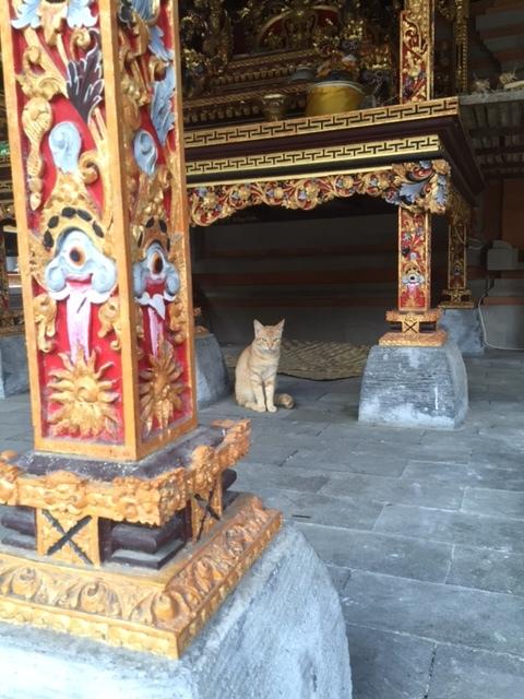 Temple kitty.