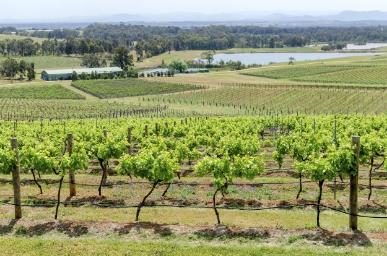 Hunter-Valley-Vineyard,-Australia-000075873455_Large.jpg