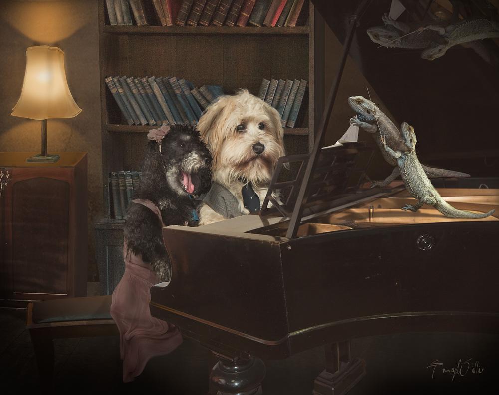 Piano dog-Edit-2-Edit-Edit.jpg