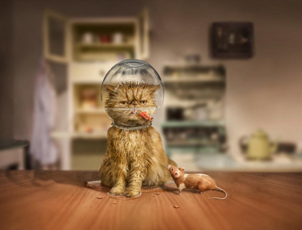 cat and bowl-Edit.jpg
