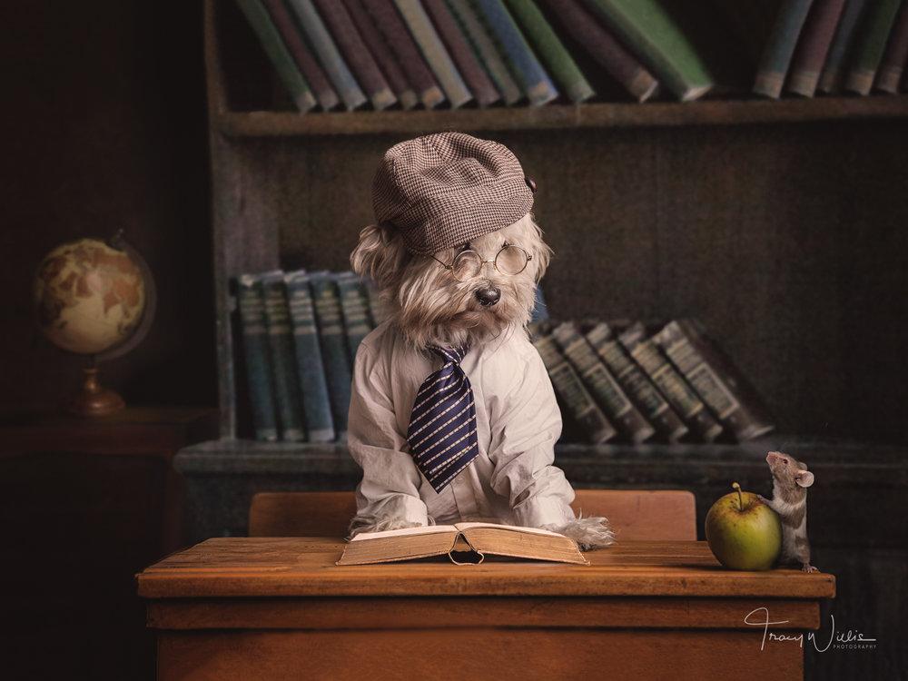 Tracy Willis Fine Art Photography Bournemouth-4.jpg