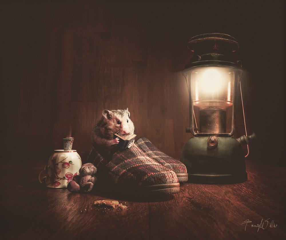 Hamster slipper-Edit-2-Edit-Edit-Edit-Edit-3-Edit.jpg