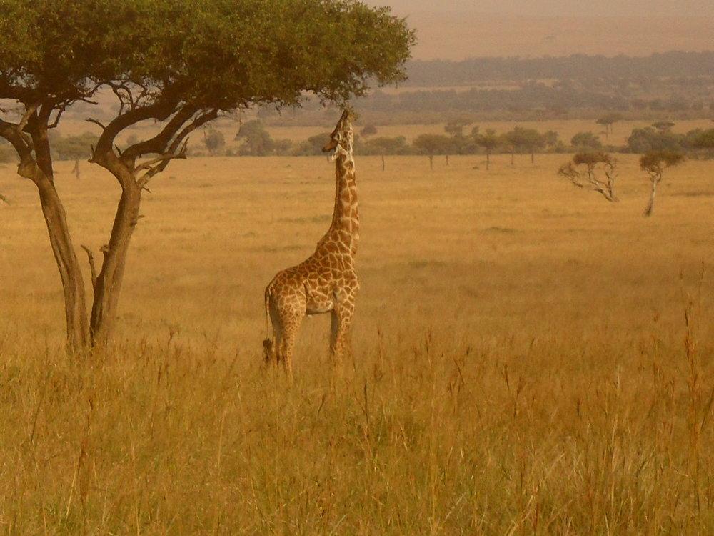 Kenya_August2012.jpg