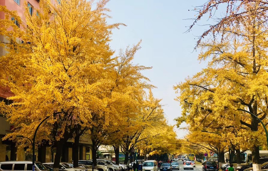 Fall leaves in beijing, china