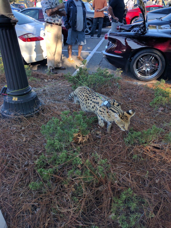 Leopard3-20161029.jpg