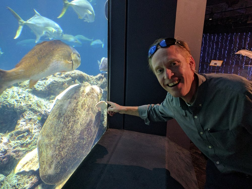 Turtle-Caretta.jpg