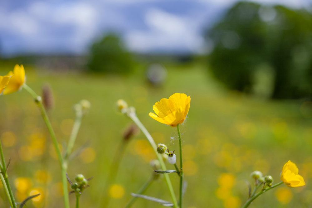 Neds-meadow3.jpg