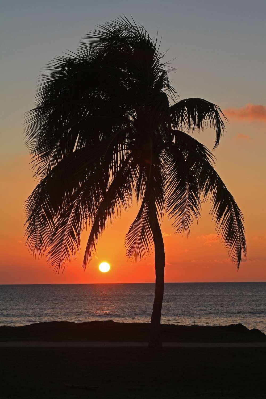 Lone Palm Maui