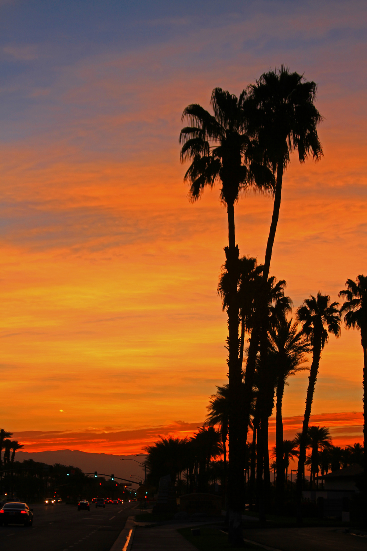 Sunrise Palm Desert