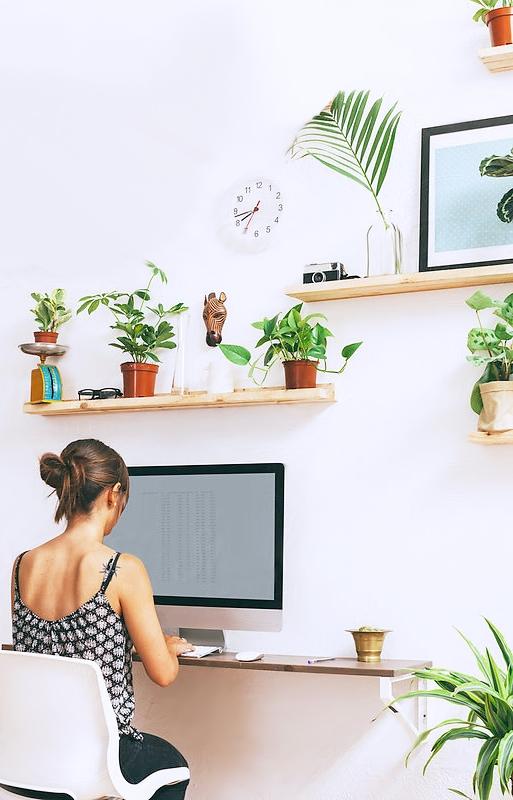 pretty-office-plants.jpg