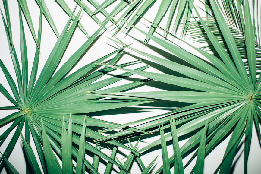 palmetto-leaves.png