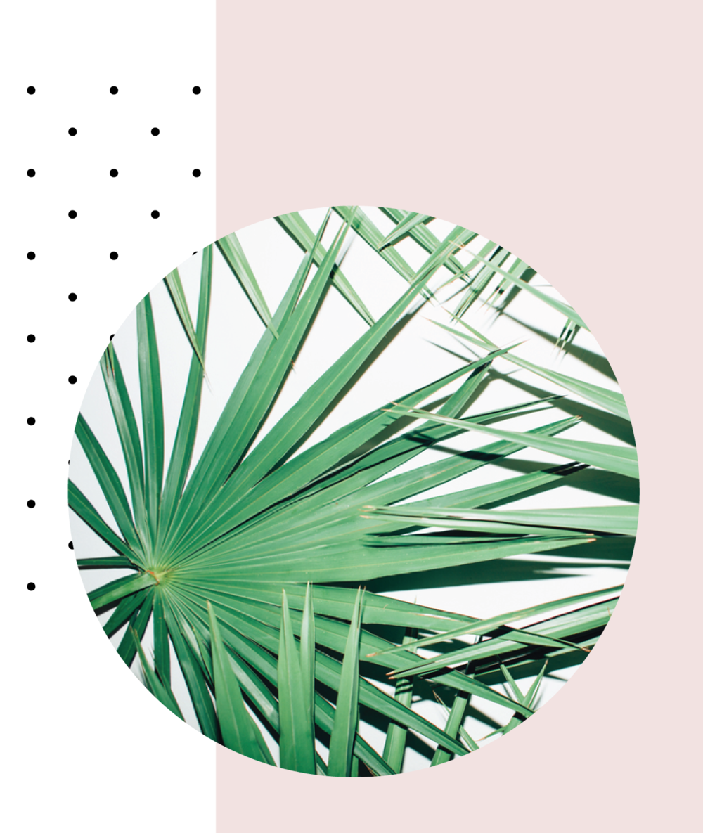 web-design-in-5-days-plants.png
