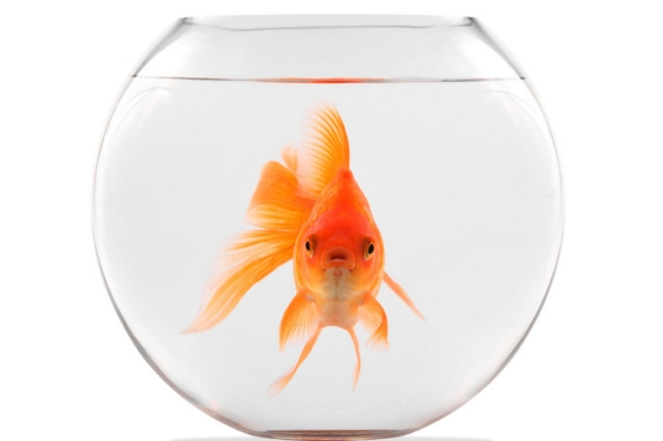 Seriously. Attention spans of a goldfish! Follow the basics of marketing or you'll be a fish out of water. I apologize for that pun.