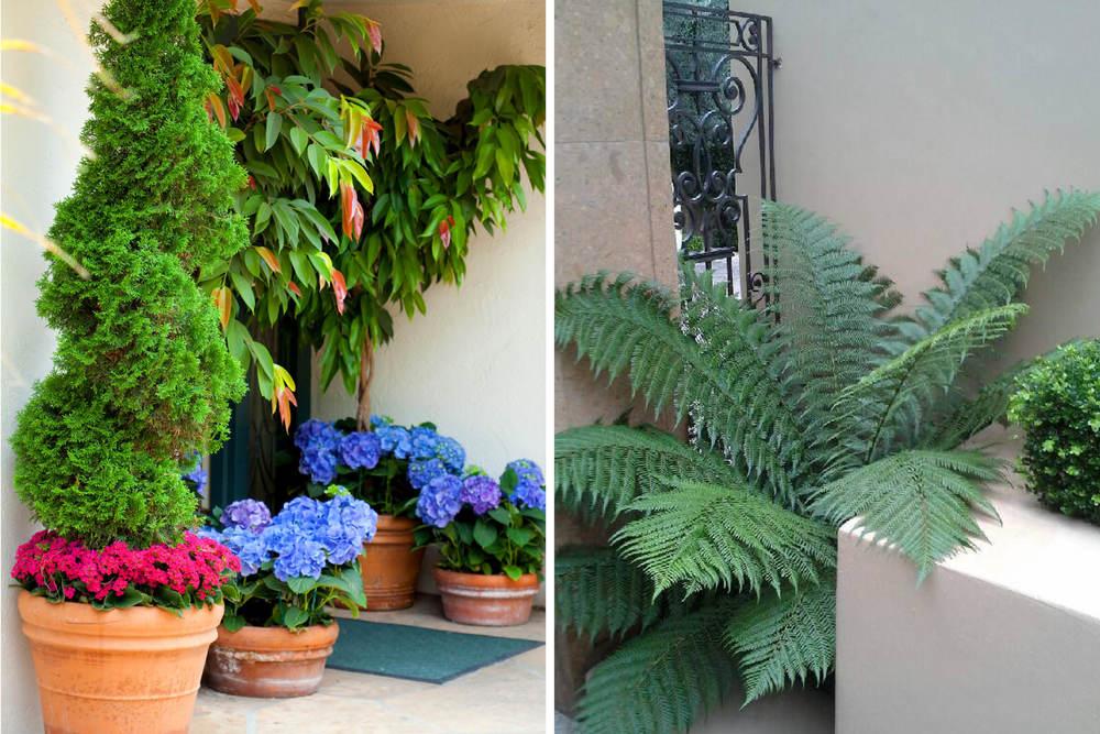 The Village Gardener Home Staging Plants Patio Decor