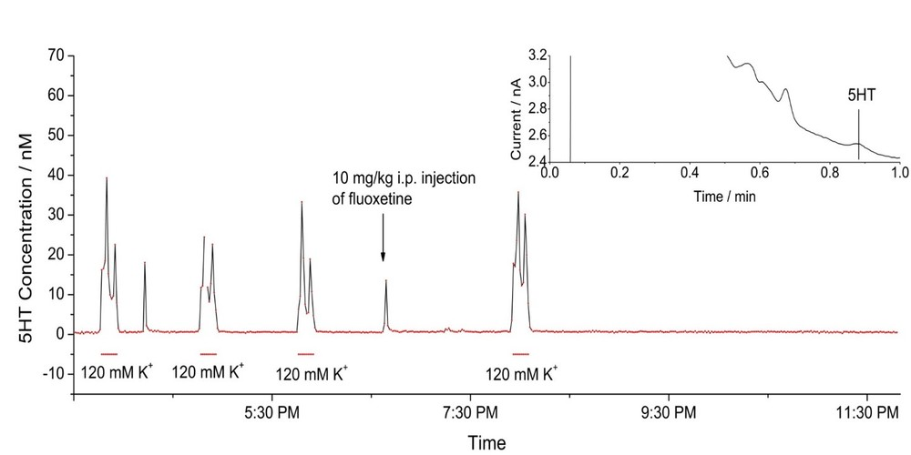 Online determinations of serotonin in awake rat striatum by microdialysis. Shown are the first eight hours of a 16-hour run. Each point represents a chromatogram (typical basal chromatogram shown in the inset). Zhang et al. 2013