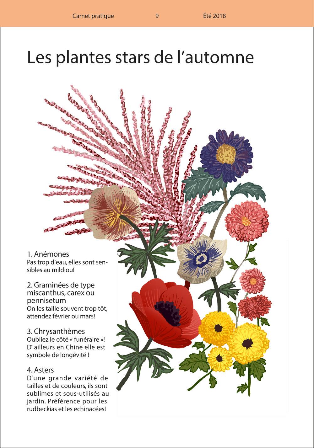 REGAIN CP N2 - Plantes stars - Couleur-02.jpg