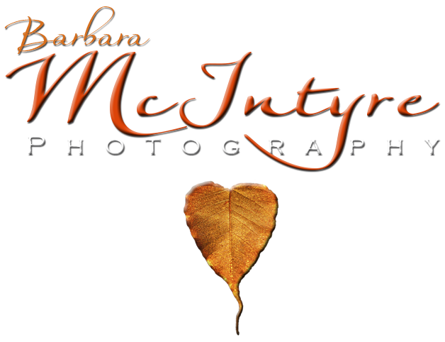 Barbara McIntyre Photography