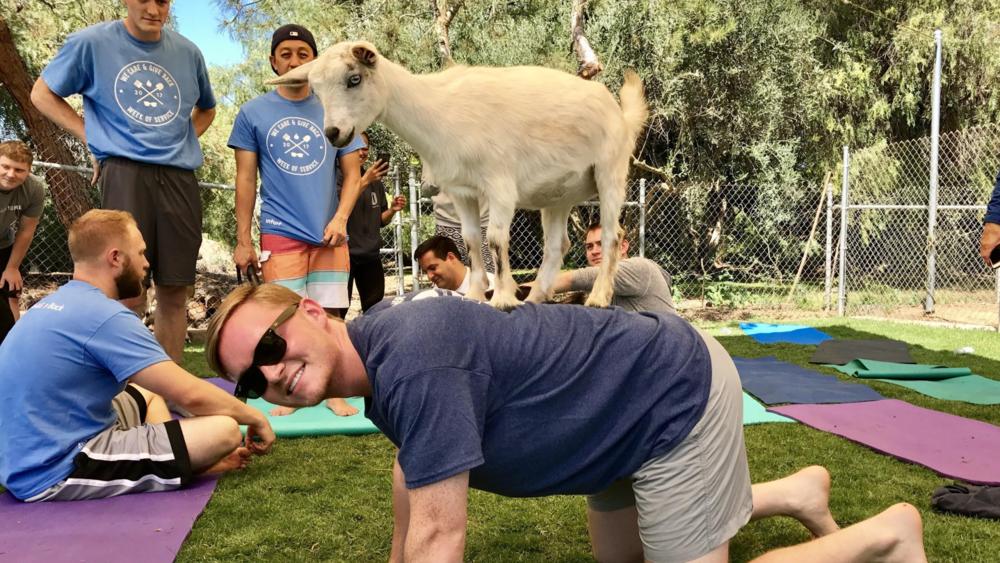 Goat Yoga Cody Reppert