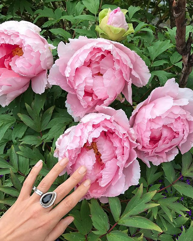 What's your favorite Springtime bloom? Tree peonies are always on my short list for the most swoon worthy blooms. #treepeony