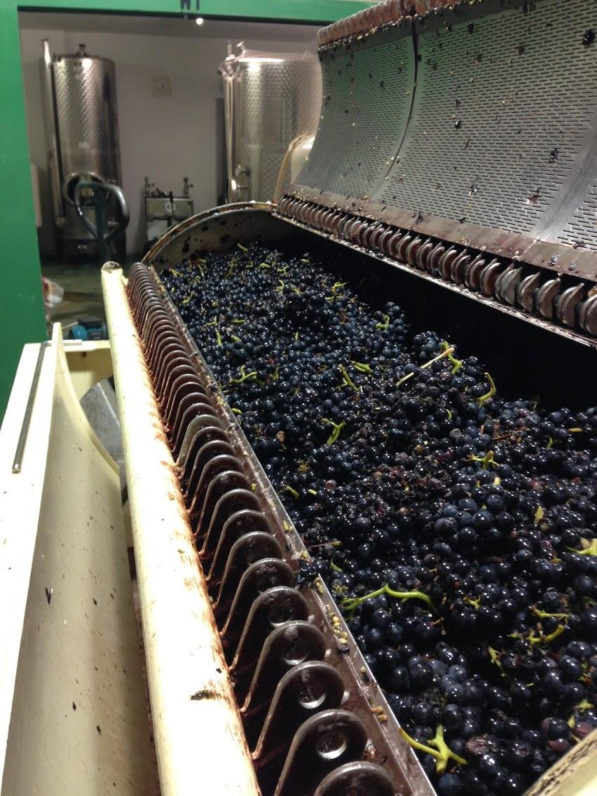 Pressing Pinot.jpg
