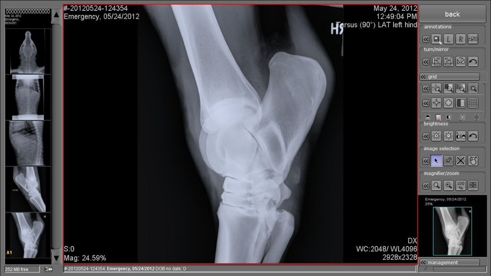 Veterinary X Ray Software Digital X Ray Equipment Nuon