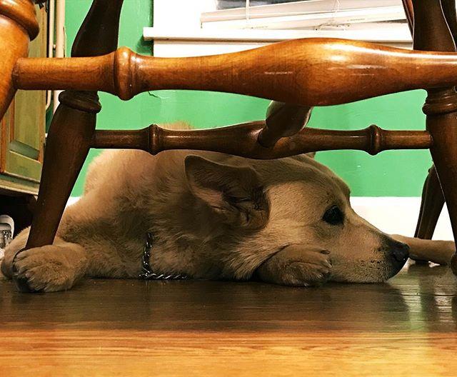A well deserved rest after a good week's work for @rigbytheshopdog