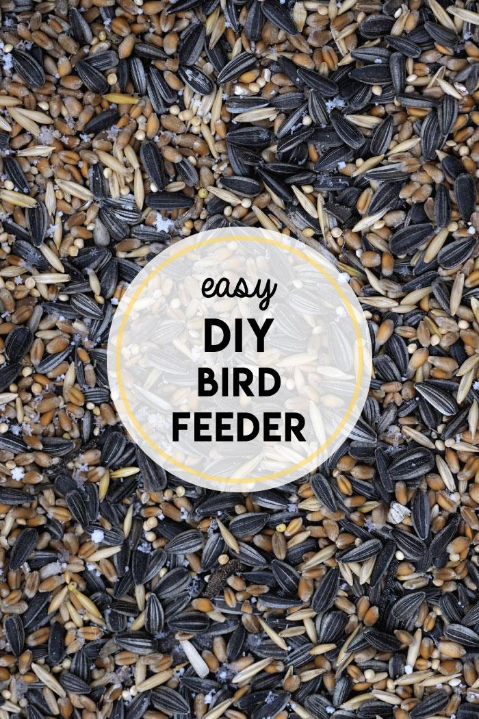 how-to-make-bird-feeder.jpg