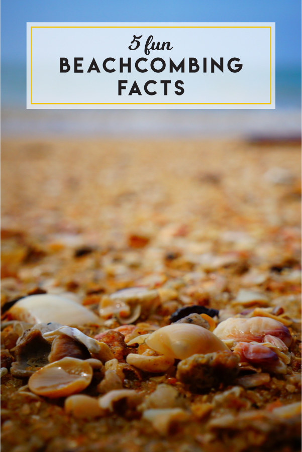 Up your summer trivia game by learning these 5 fun beachcombing facts.