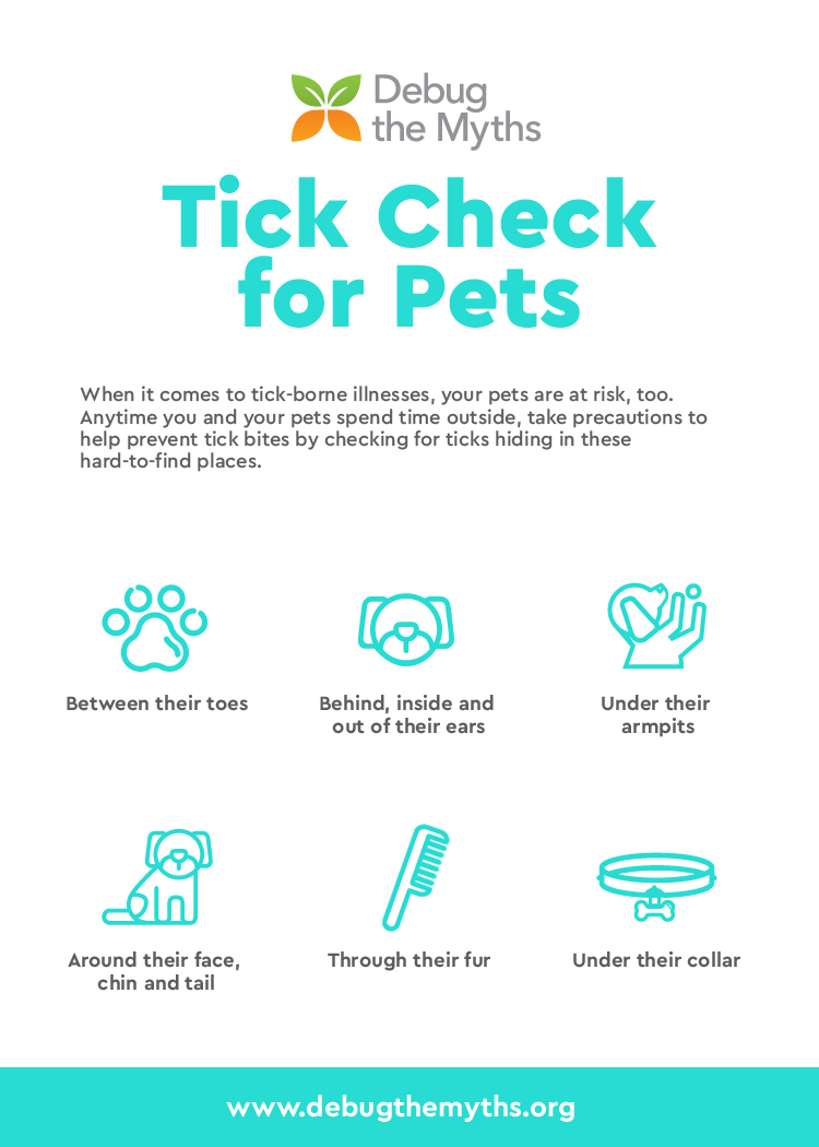 It's important to check your pets for ticks too! Here are 6 places to look for ticks on your pet.