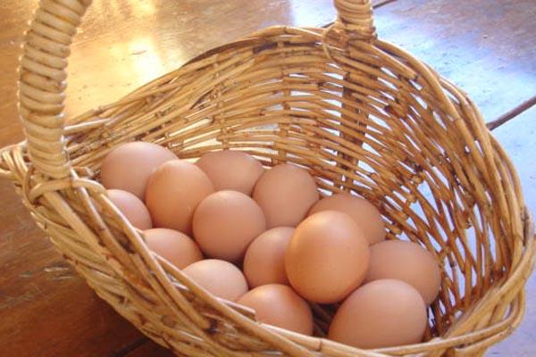 Look at all those eggs - Dorrigo