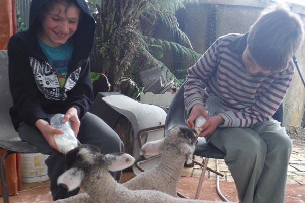 Kids feed lambs - healing trauma