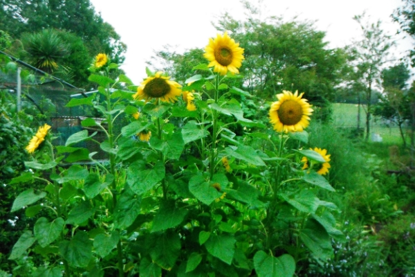 explore your senses in the garden