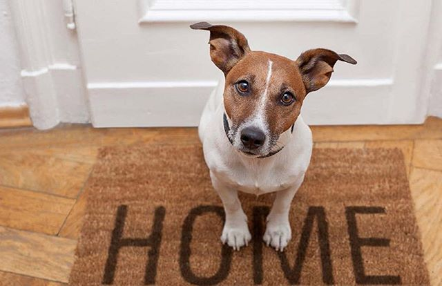Do you have a last minute summer vacation planned? Let us make sure your 4-legged family members are taken care of while you are away! 🐶🐱