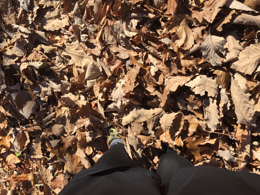 My poor Altra Lone Peaks can barely see the sun under all those leaves.