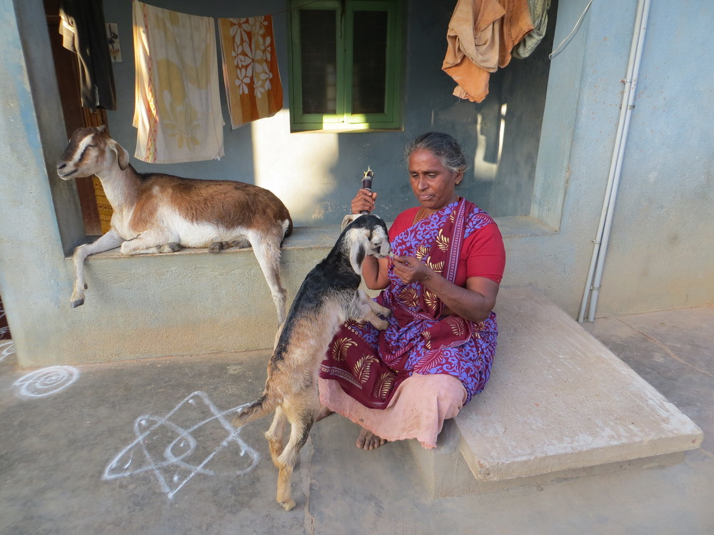 A woman we saw on the street, getting cozy with her goat