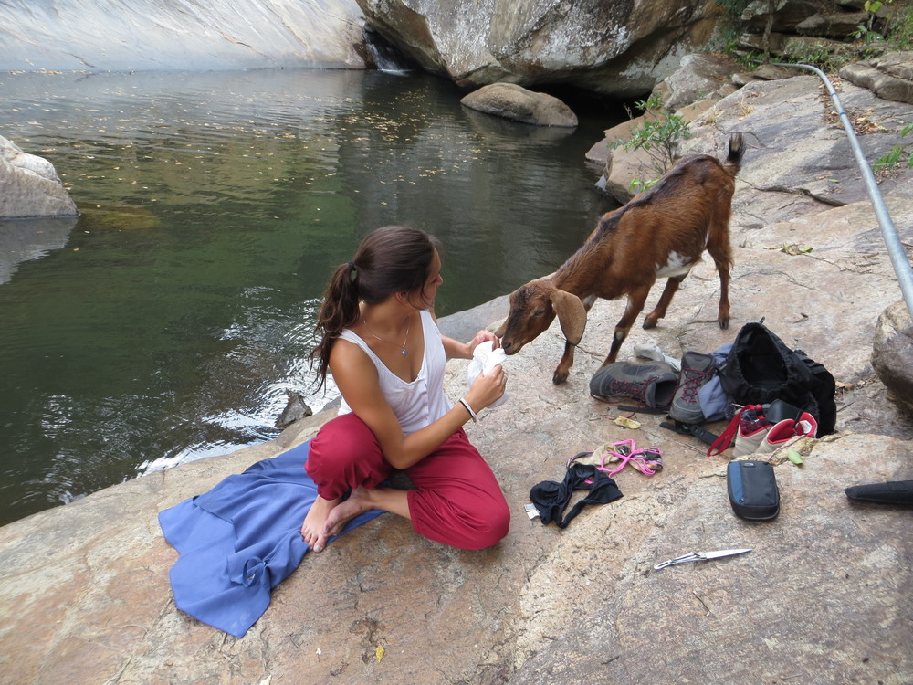 Making friends with a goat in Marayoor, she wanted to eat everything!